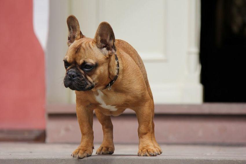 People Watching Dogs Dogs SweetLe EyeEm Best Shots