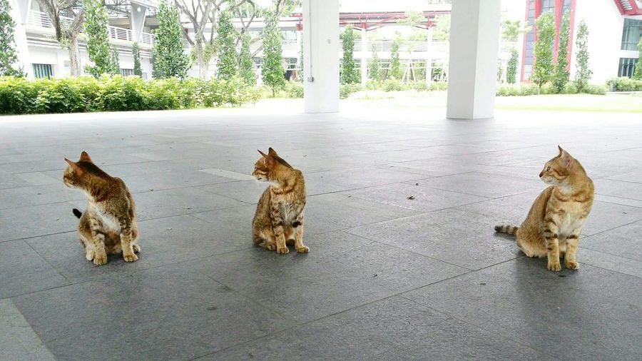 View of three cats looking away
