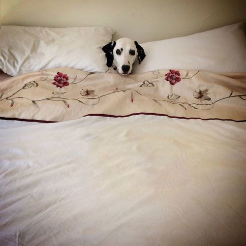 The dog's in my bed!! Check This Out Daylight Dubai Mydubai Dog Bed Mybed Unbelievable Shesjustadog Funny