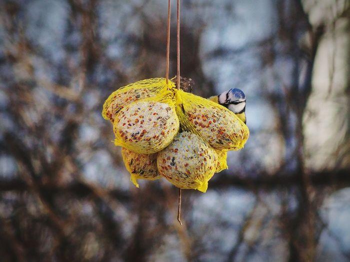 Close-up of bird feeder outdoors