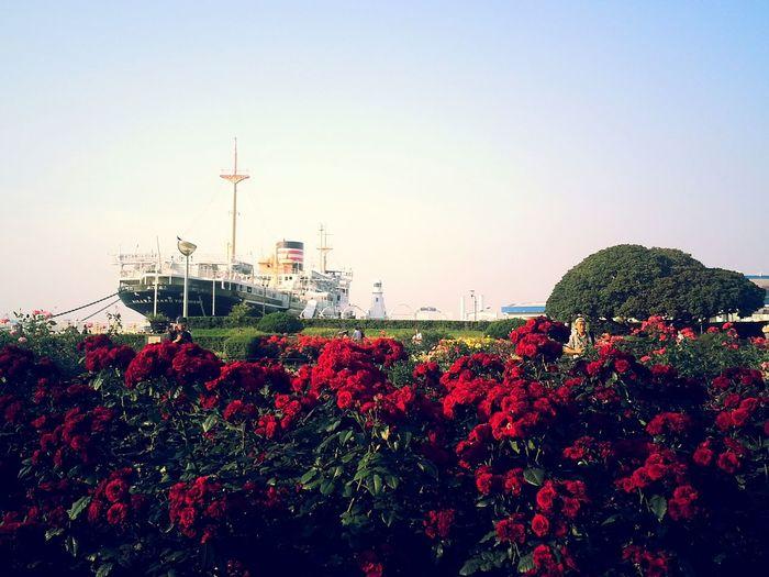 Yokohama Yamashita Kouen Park Rose Garden Ship Oldest Ship In Japan