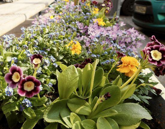 Beautiful Berlin Blossom Building City Dogs Flowers Olympus Pen Lite E-PL7 Spring Springtime