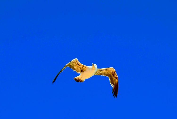bird on sky