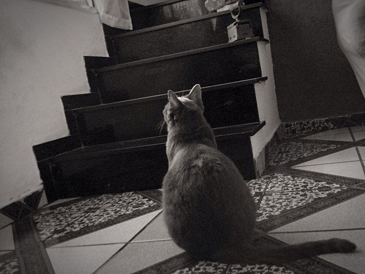 Cat Gatos