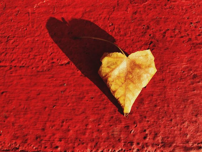 High angle view of leaf on red wall