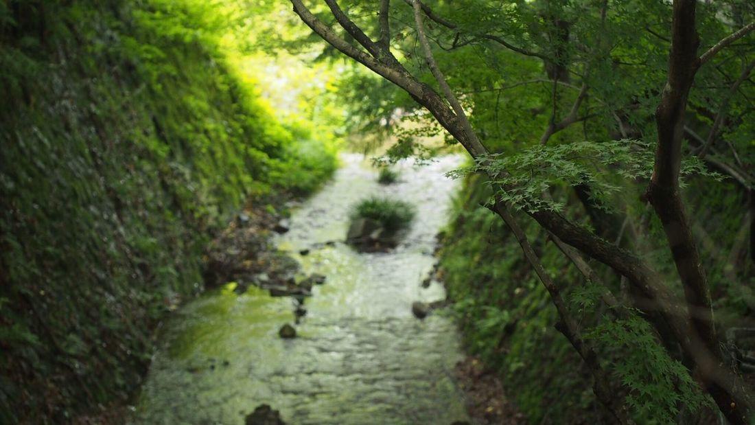 大原 Japan,koyto Green Nature EyeEm Best Shots EyeEm Nature Lover Beautiful Nature もみじ Light And Shadow Beautiful ♥ Enjoying Life River River View