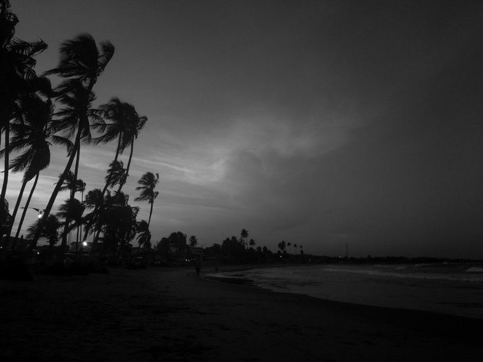 Late in the afternoon on the beach Beach Beauty In Nature Calm Cloud Dark Growth Majestic Monochrome Photography Nature Outdoors Outline Overnight Success Palm Tree Remote Scenics Sea Shore Silhouette Sky Solitude Black And White Friday Tranquil Scene Tranquility Tree Welcome To Black