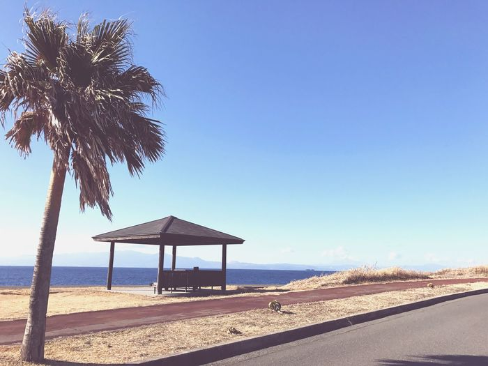 Bench and palm tree Izuoshima Island Nature Sea Tokyo Palm Tree Bench