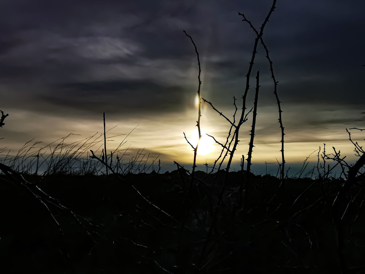 SILHOUETTE PLANTS ON FIELD DURING SUNSET