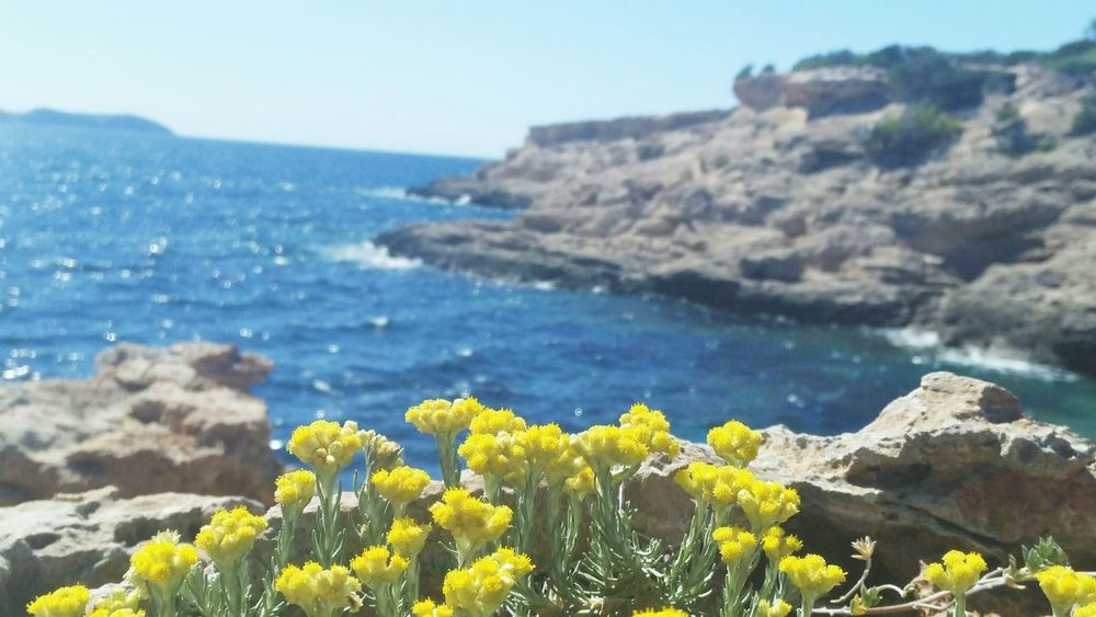 Nature Flower Sunny Sea Landscape Tranquility Beach Mountain Travel Destinations Scenics Yellow Outdoors Beauty In Nature Tranquil Scene Plant Uncultivated No People Clear Sky Day Sky
