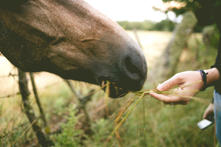 Hand feeding a horse Fieldscape Horses Animal Themes Close-up Day Domestic Animals Feeding  Field Fields Focus On Foreground Grass Horse Human Hand Livestock Natural Parkland Nature Outdoors Parliament