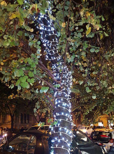 Lit Tree Unravel