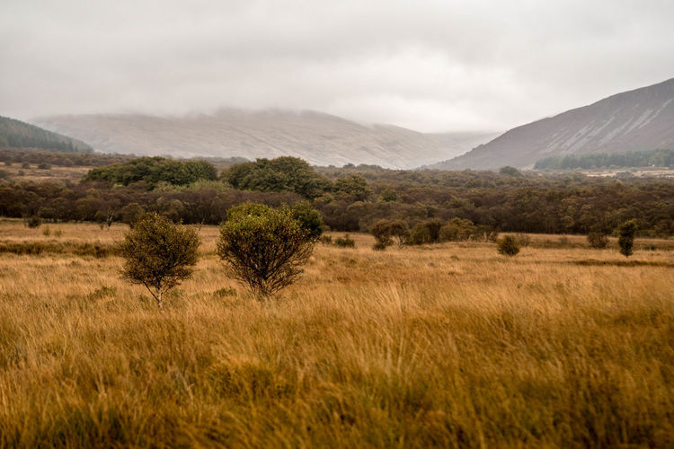 Colorful autumn at isle of arran Autumn Autumn Colors Exploring October Rain Roaming Wildlife & Nature Beauty In Nature Grass Highlands Landscape Moorland Mountain Mountain Range Nature No One No People Outdoors Scenics