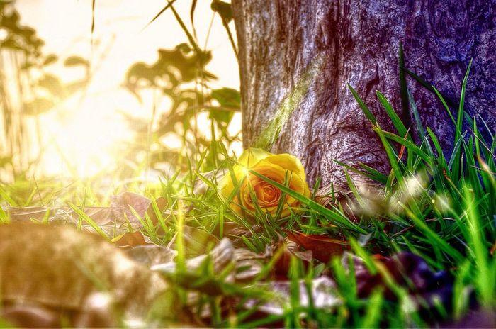 it's a beautiful day Sunset #sun #clouds #skylovers #sky #nature #beautifulinnature #naturalbeauty #photography #landscape EyeEm Best Shots Enjoying Life Nature_collection