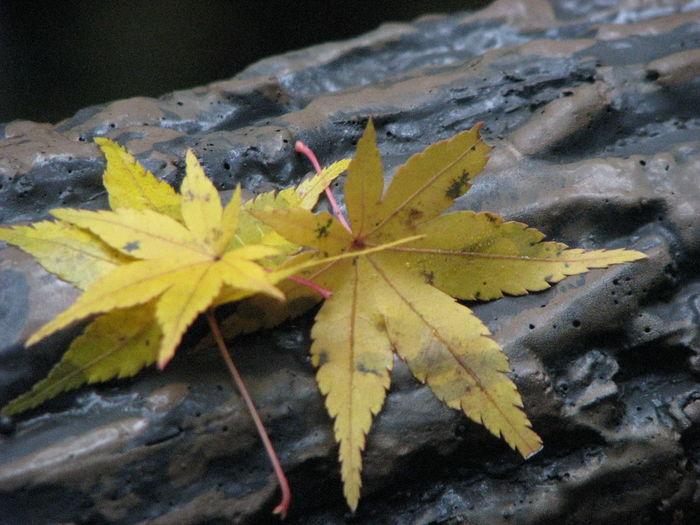 落ち葉の親子 Nature EyeEm Nature Lover 紅葉 Japan
