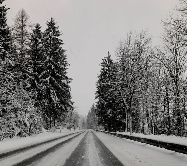 Winter Wonderland Road Snow Austria Mountain Tree Nature Covering Beauty In Nature No People Cloudy Wintertime Winter Winter Trees Streetphotography Street Winterstreet Snowstreet Gosau NewYear Silver
