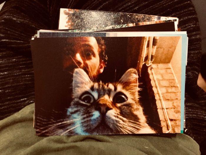 Oldphotos Cat