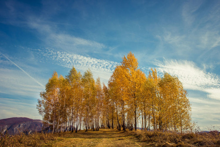 Low angle view of autumn trees on field against sky