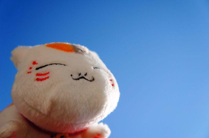 にゃんこ先生、秋の空をみあげるの図♡2014.9.12 Japan Sky Morning Sky Blue Sky