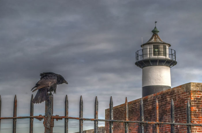 Bird and Lighthouse Bird No People Sky Built Structure Animal Themes Architecture Animal Wildlife Animals In The Wild Nature Perching Lighthouse Southsea Portsmouth Hampshire  England