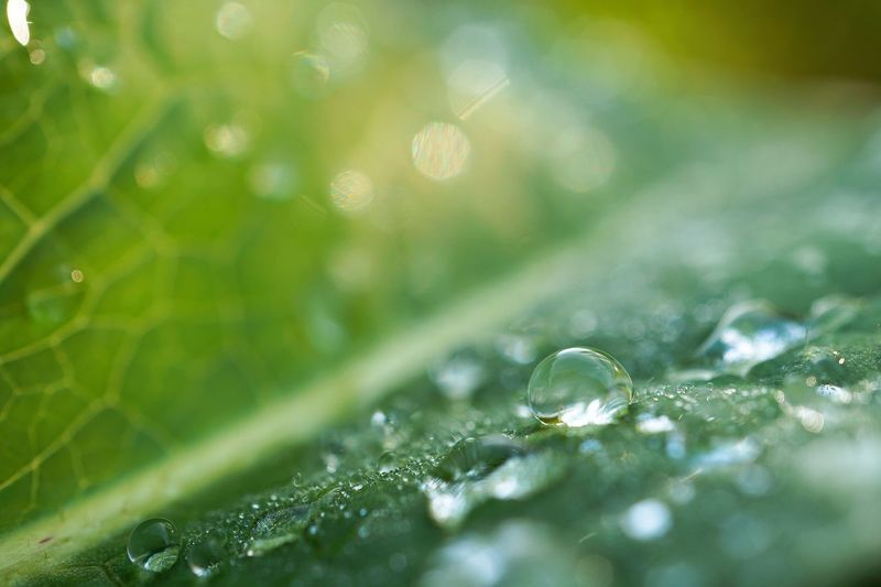 the raindrops in the green plant leaf in the garden in the nature Leaf Leaves Green Green Color Plant Rain Rain Drops RainDrop Drops Water Freshness Nature Garden Fresh Beauty In Nature Beautiful Fragility Fragile Wet Backgrounds Wallpaper Outdoors Autumn Fall Winter