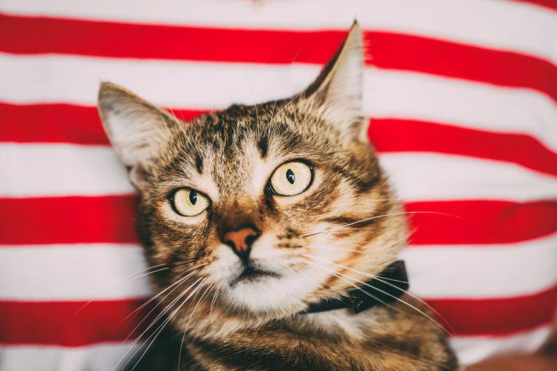 Close-up portrait of cat against striped textile