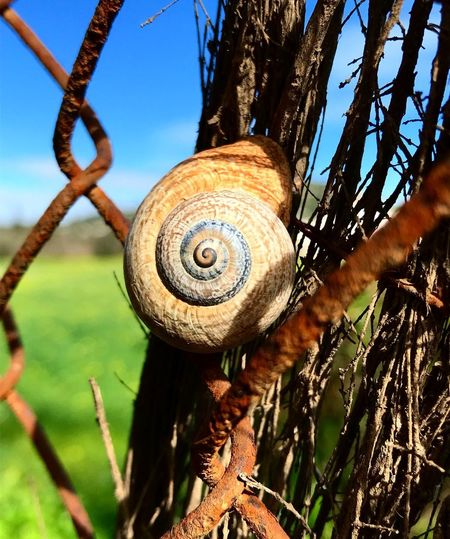 Just perfect UNESCO World Heritage Site Mother Nature Blessedandthankful Mobilephotography Beautiful Energy Snail One Animal Spiral Animal Shell Animal Themes Wildlife Nature Beauty In Nature