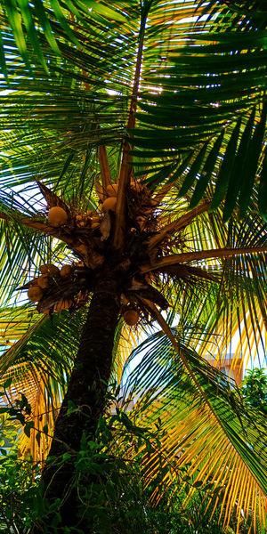 Tropical tree Beach Westjava Westjavaindonesia Beachphotography Nature Photography Holiday Nature Tropical Tropical Plants Coconut Coconut Palm Tree Green Color