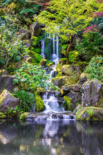 Little falls! Beauty In Nature Blurred Motion Day Falling Water Flowing Flowing Water Forest Garden Growth Land Long Exposure Motion Nature No People Outdoors Plant Rainforest Rock Rock - Object Running Water Scenics - Nature Solid Tree Water Waterfall