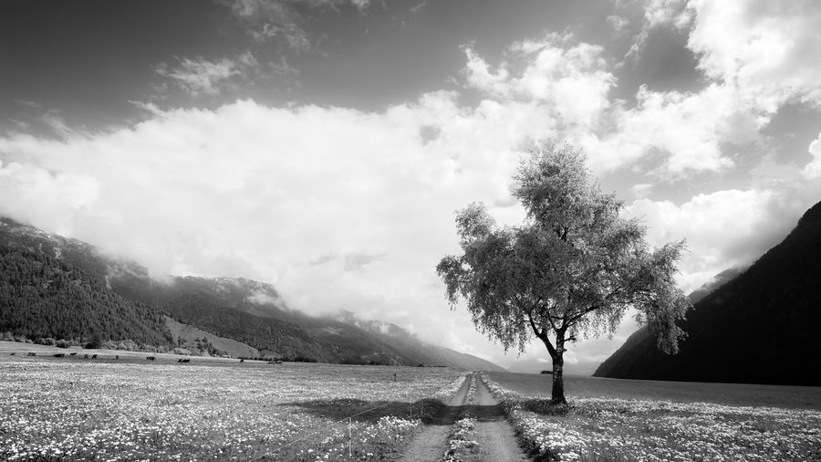Landscape in Müstair, Switzerland Blackandwhite Black And White Photography Landscape Blackandwhite Clouds And Sky Müstair Switzerland Spring Has Arrived Lonely Tree In Field Tree Plant Sky Cloud - Sky Tree Nature Beauty In Nature Day Tranquility Land Field Tranquil Scene Landscape Environment Outdoors Idyllic