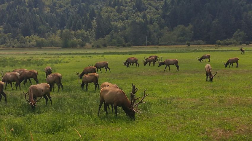 elk ♡♡ hanging out taking photos nature_collection enjoying nature nature enjoying the sun travelphotography ♡♡♡ photography elk
