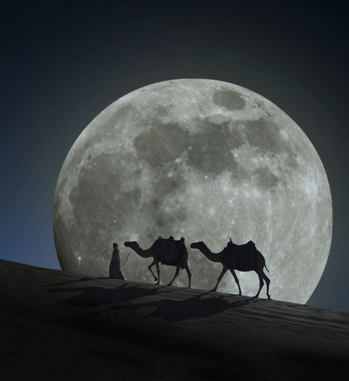 Abu Dhgabi Astrology Sign Astronomy Camel Desert Military Moon Myself Nature Night No People Outdoors Science Space Teamwork