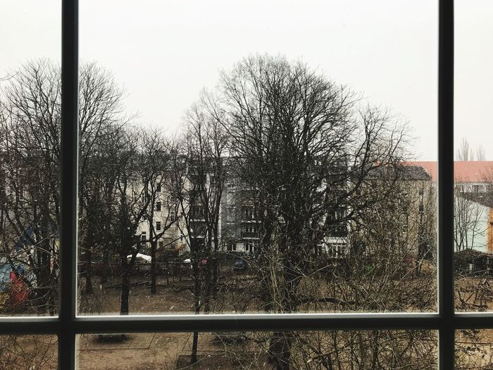 Wood Wood - Material Window Winter Bare Trees Glass - Material Window Transparent Sky Nature Day Tree Boundary Barrier No People Glass Outdoors Plant