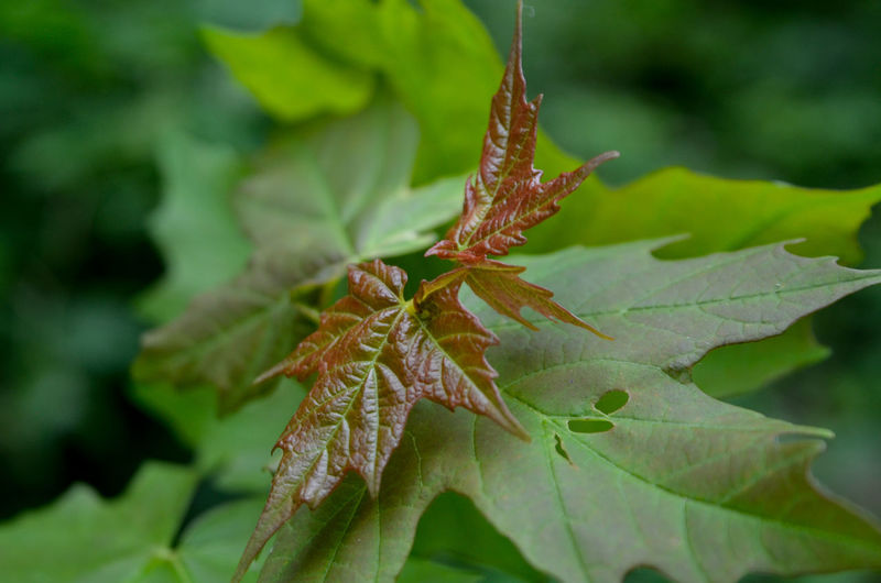 Leaf Close-up Animal Themes Plant Green Color