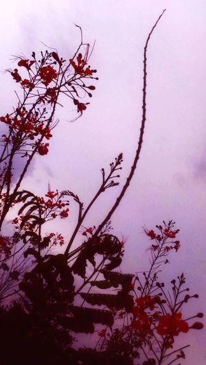 Orange Flower Nature_perfection