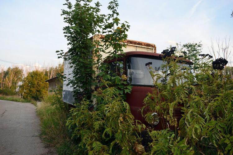 Tree Plant Growth Nature Green Color No People Sky Outdoors Agriculture Close-up Greenhouse Day Mountain Miles Away Backpacking Travel Photography The Purist (no Edit, No Filter) Rusty Abandoned Derelict Derelict & Abandoned Truck Old Old Cars Summer
