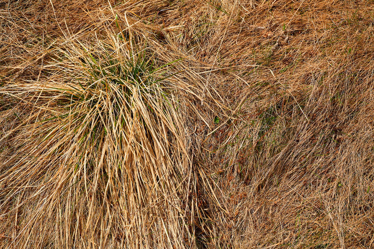 High angle view of stalks in field