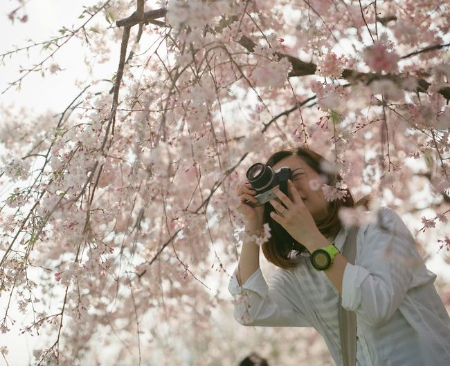 Low Angle View Of Woman Photographing Below Cherry Blossoms At Park