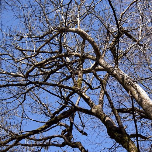 Branches Tree