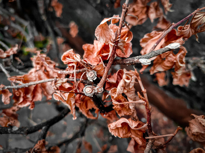 Close-up of dried autumn leaves on tree and color look dry twigs