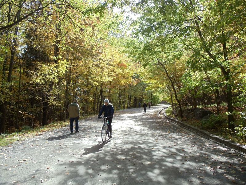 Bicycle Canaado Diminishing Perspective Dirt Road Footpath Full Length Growth Leisure Activity Lifestyles Men Mont Royal Montréal Nature Park - Man Made Space Person Rear View Road The Way Forward Togetherness Tree Walking