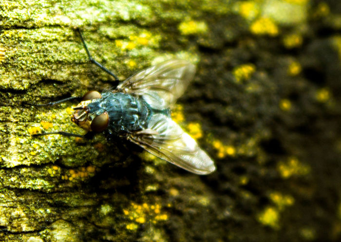 Beauty of a housefly? 4 Animal Antenna Animal Themes Beauty In Nature Close-up Day Entemology Fly Away Focus On Foreground Green Color Growth House Fly Insect Insects  Nature No People Outdoors Plant Pollination Selective Focus Wildlife