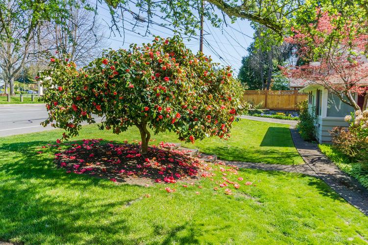 Flowering plants in park