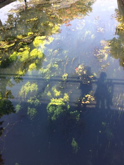Spoy Water Water Plants Shadows Silhouette Tranquility Kleve Reflections