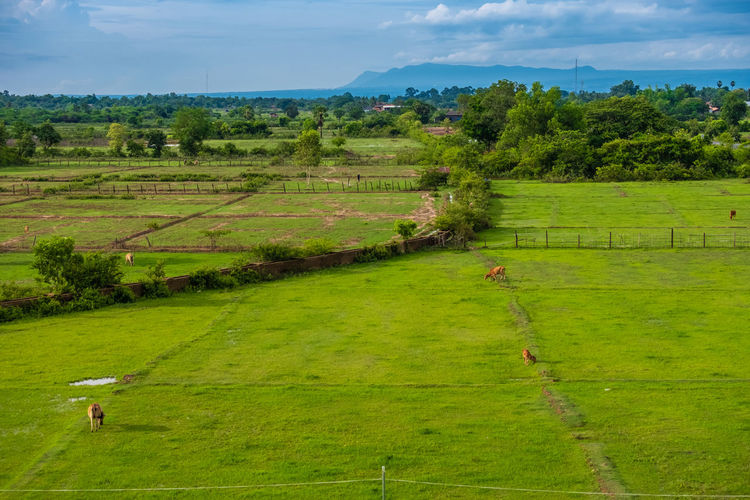 Plant Green Color Landscape Environment Grass Field Land Tree Tranquil Scene Scenics - Nature Tranquility Nature Day Beauty In Nature Sky Growth Agriculture Rural Scene No People Cloud - Sky Outdoors Champasak Laos LAO Nature Mist Fog Mountain Southernlaos