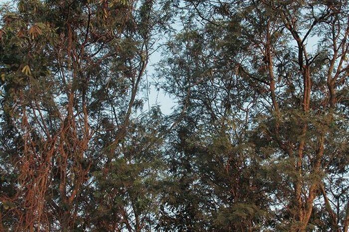 Bom dia! Canon VSCOPH VSCO Instabrasil Instaphoto Vscobest Vscogrid Vscogood Vscogram Camera Arte Vscocam Vscobrasil Foco árvores Verde Green