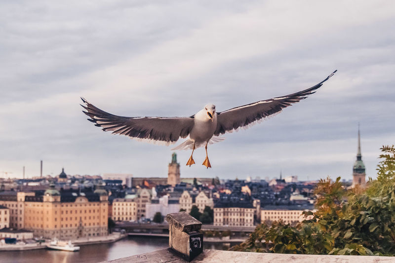 Seagulls flying over buildings in city
