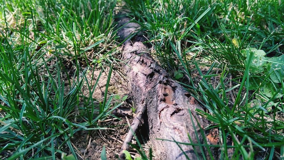 Grass Day Outdoors Nature Growth No People Roots Roots Of Tree Roots Of Tree - Roots Of Life Root Of A Tree