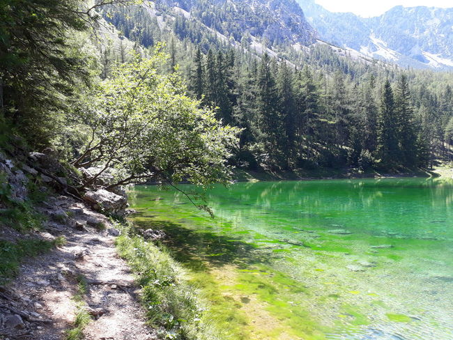 green water 💧💚 Theme Backgrounds Background Summer Summertime Green Lake Aussicht Grün See Natur Steiermark Austria Sun Grüner See Tragöss Holiday Sunny Vacations Vacation Styria Nature Day No People Beauty In Nature Scenics Tree