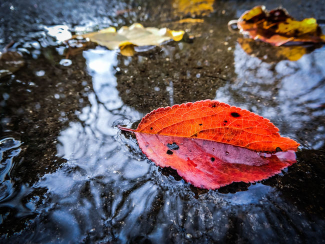 After The Rain Puddle Reflection Red Winter Coming Melancholic Atmosphere Autumn Leaves Capture The Moment Colors Of Autumn EyeEm Best Shots EyeEm Masterclass EyeEm Nature Lover Fall Beauty Fragility Getting Inspired Hello World Macro Macro Beauty Nature Nature On Your Doorstep Perspective Silhouette Taking Photos Water Reflections